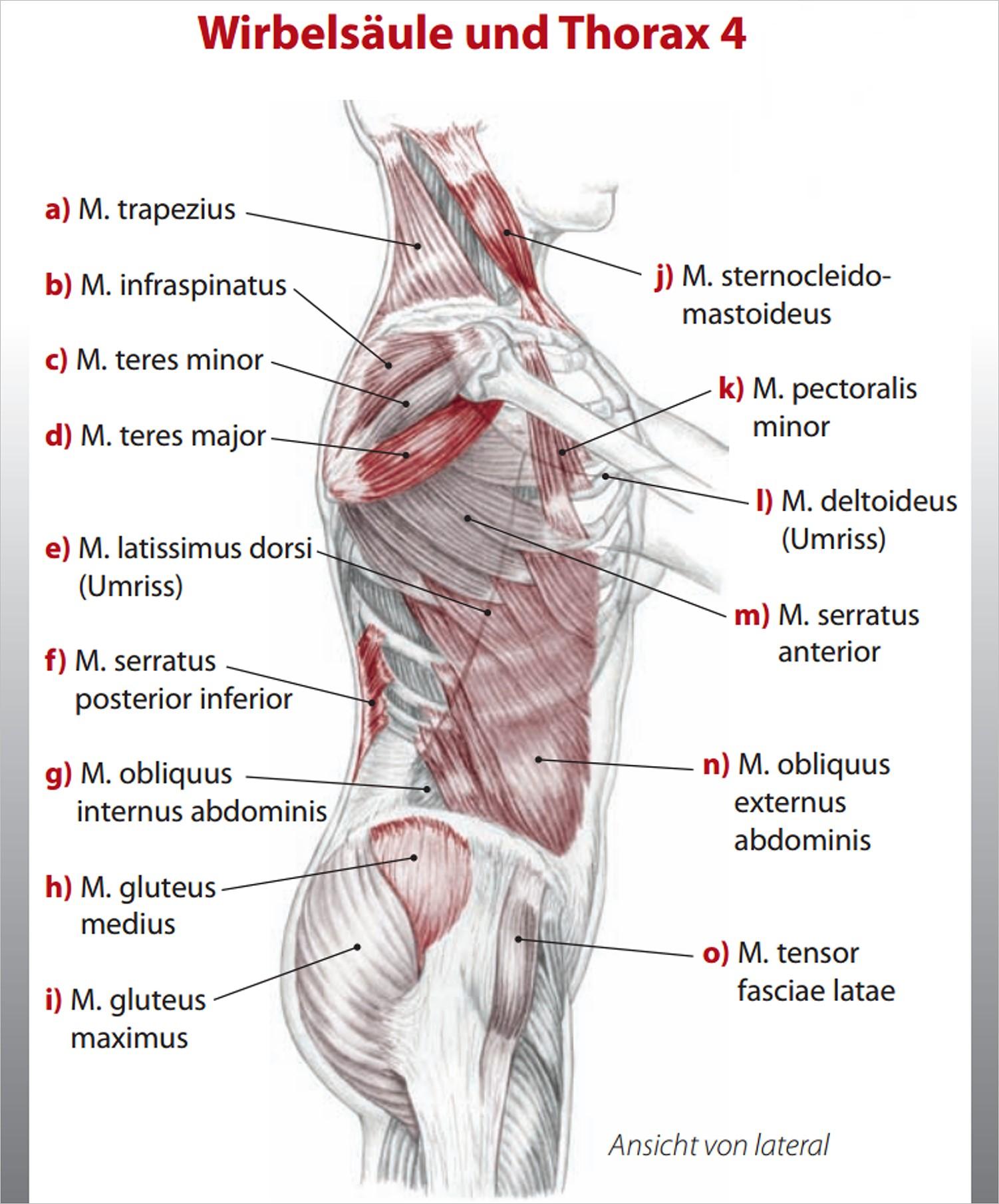 Fachbücher, Software und DVDs | Trail Guide Lernkarten-Set Anatomie ...