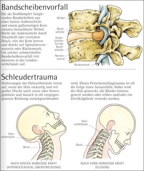 Fachbücher, Software und DVDs | Anatomie-Atlas. | medienservice medizin