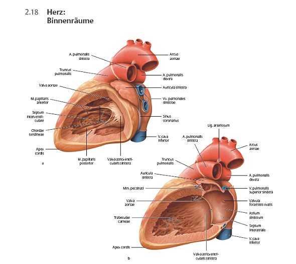 Fachbücher, Software und DVDs   Innere Organe.   medienservice medizin