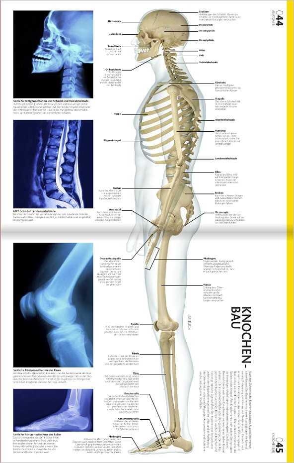 Fachbücher, Software und DVDs | Anatomie und Physiologie ...