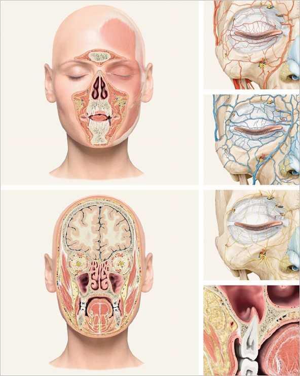 Fachbücher, Software und DVDs | Das Gesicht - Bildatlas klinische ...