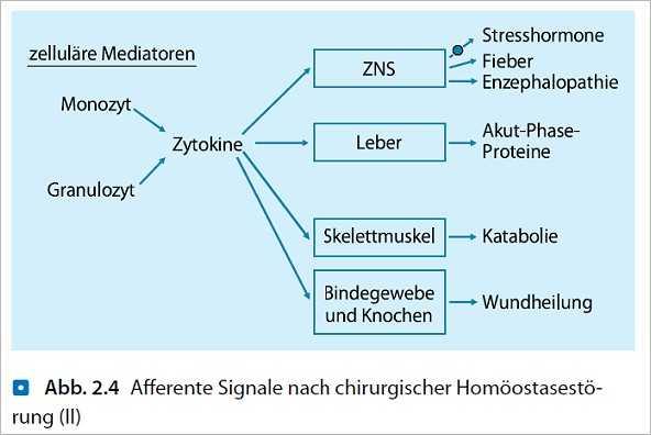 Abdominelles Kompartmentsyndrom