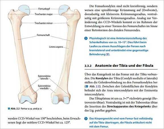 Fachbücher, Software und DVDs   Knochendefekte und Pseudarthrosen ...